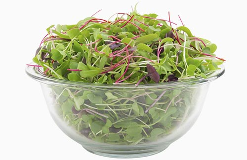 Sweet & Spicy Mix – organic microgreens nutritious healthy produce